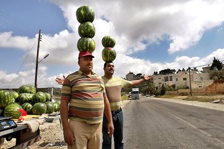 Бизнес на выращивании арбузов и дынь