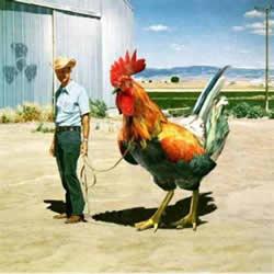 Содержание домашней птицы - Подробнее...
