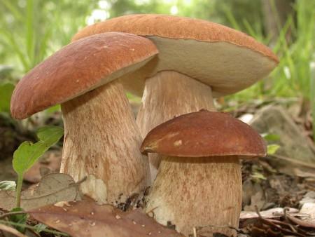 грибы для засола фото