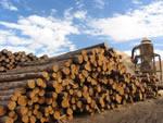 Организация деревообрабатывающего бизнеса. Деревообработка и Лесодобыча