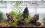 Бизнес на разведении аквариумных рыбок. Декоративные рыбки