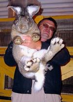 Бизнес на разведении декоративных кроликов