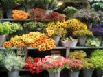 Бизнес-план - продажа цветов