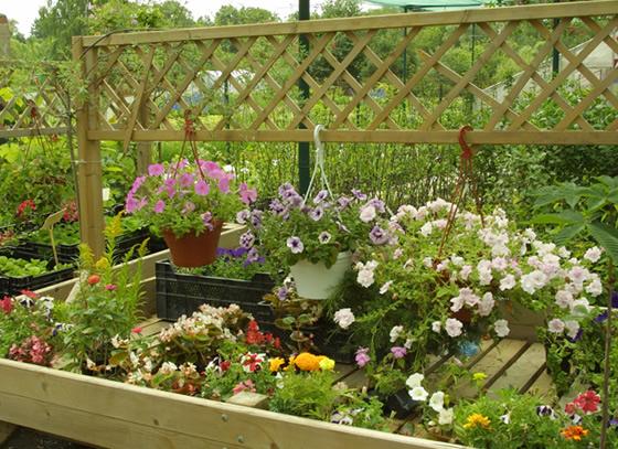 Выращивание цветов в саду своими руками