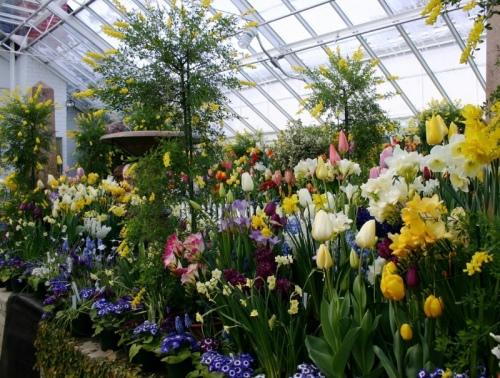 Выращивать цветы на продажу дома