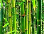 Изготовление бамбуковых удилищ