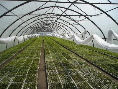 В Белгородской области будет построен очередной тепличный комплекс на 12,9 га