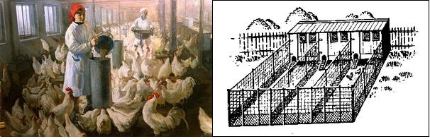Как сделать птицефабрику