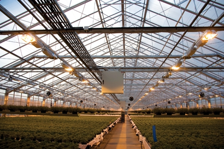 greenhouse business plan example