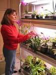 Бизнес по выращиванию орхидей