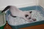 Производство и сбыт наполнителя для кошачьих туалетов с нуля