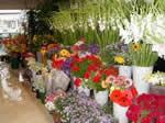 Бизнес План магазин цветы